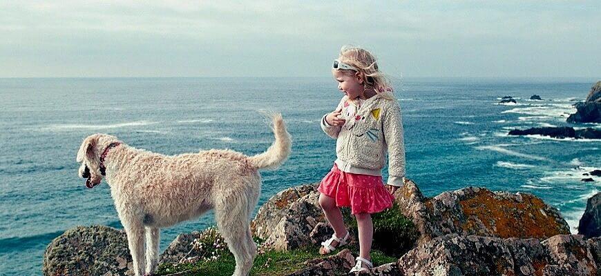 Собака и ребёнок гуляют вместе