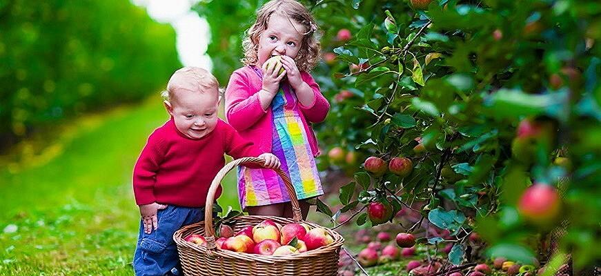 дети помогают собиратьурожай